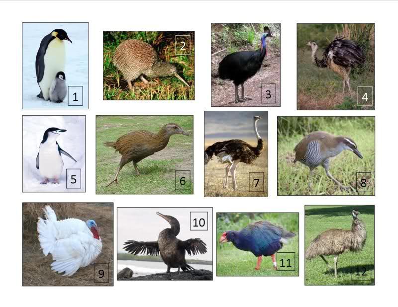 ecology definitions kakapo takahe