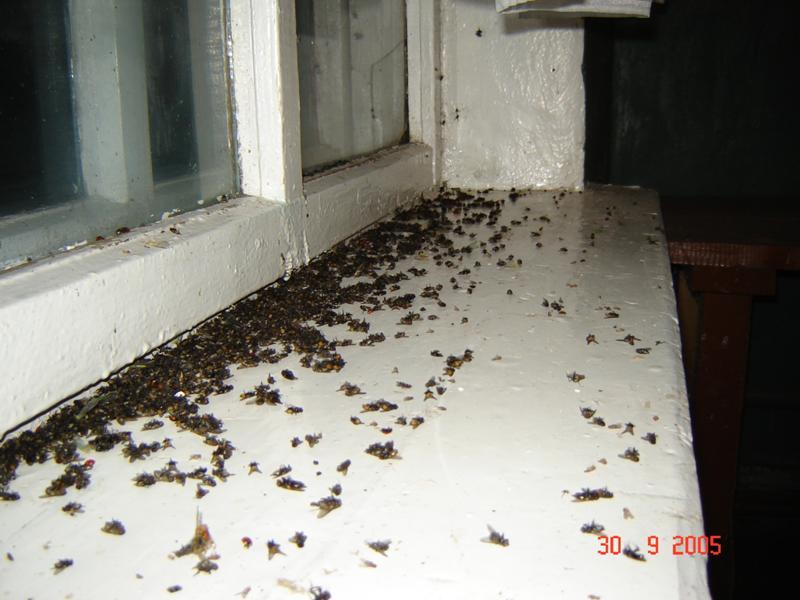 Мухи зимой в квартире причины