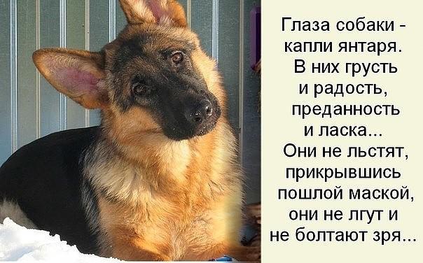 Днем россии, открытки про верность собак
