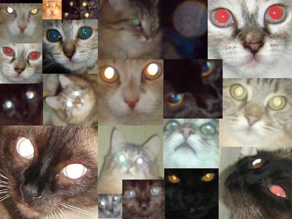 могут ли видеть коты духов бондаже поебалась