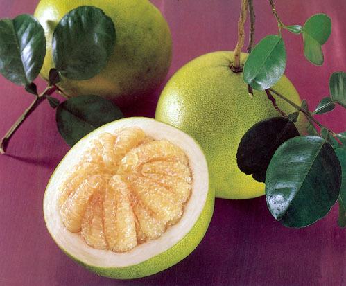 памела фото фрукт