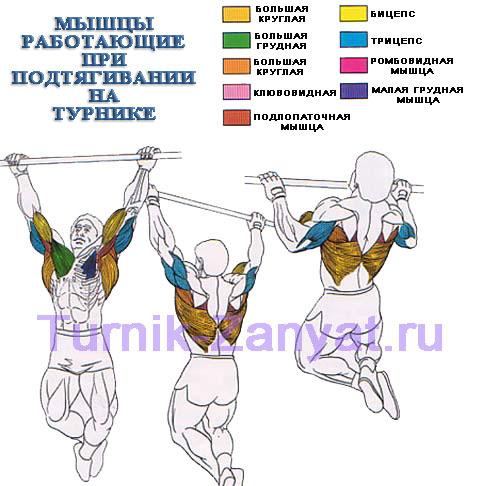 какие групаы мышц работают при подтягивании
