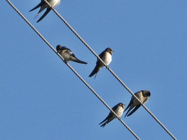 прекрасные диетологи много птиц собирается на крышах месте