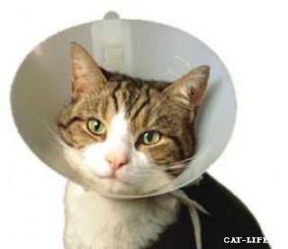 Картинки по запросу памперс для кота