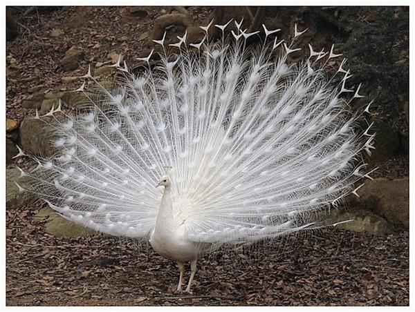 Жопа в перьях