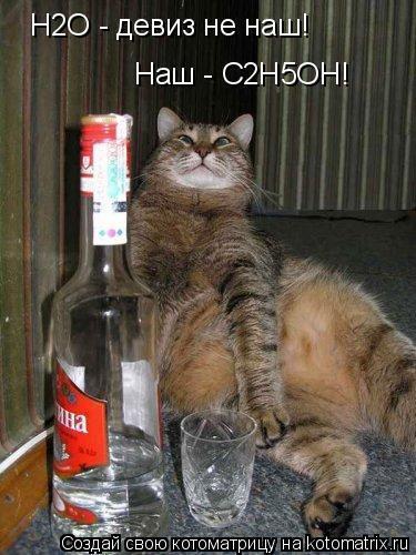 Картинки кот бухает