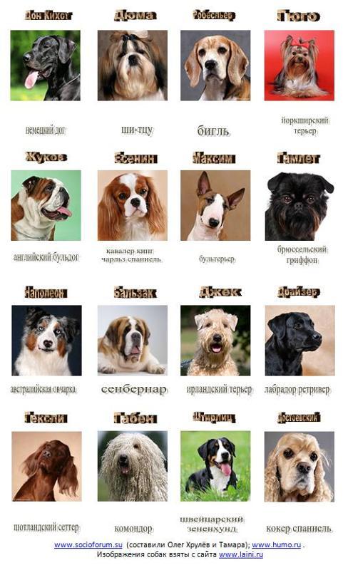 список с картинками маленьких собак выполнено