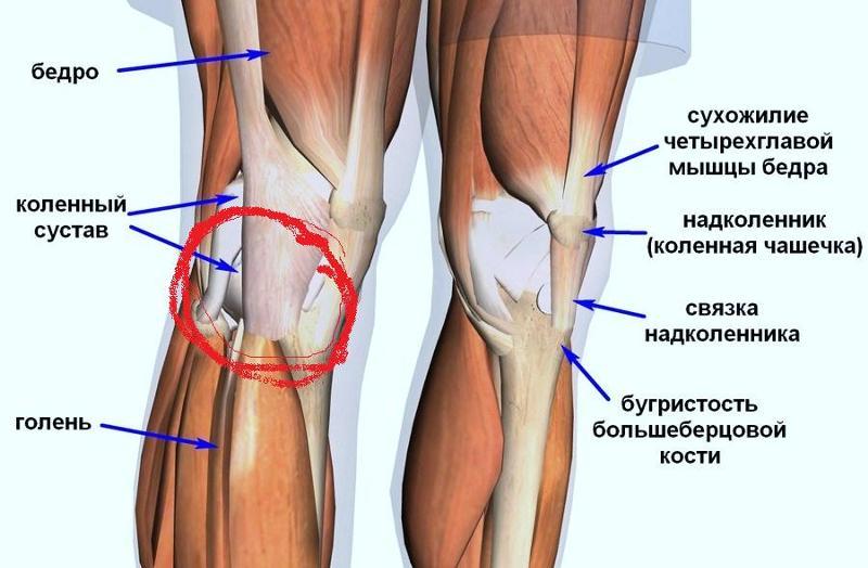 После велосипеда болит колено узи тазобедренных суставов на первомайской