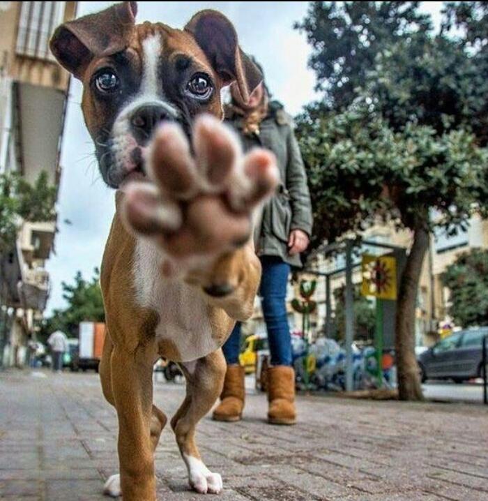 Днем, собака на картинках приколах