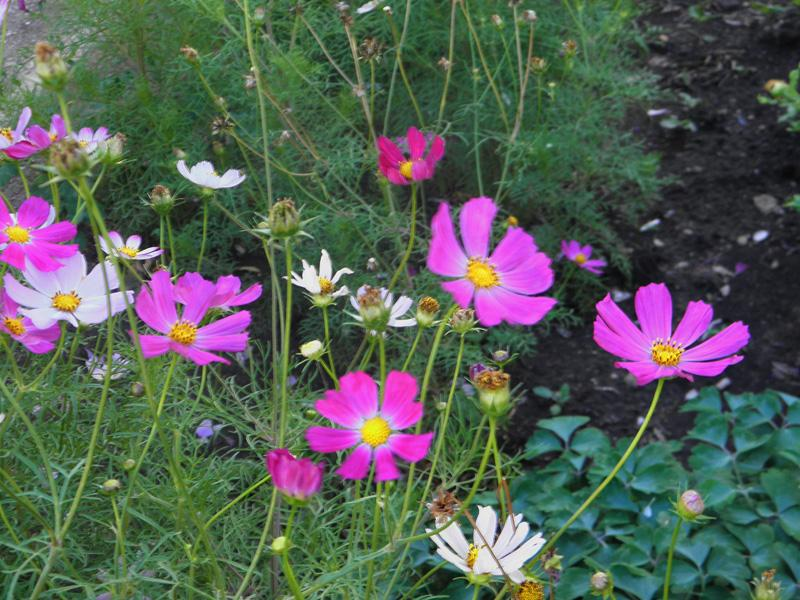 Фото цветов похожих на ромашки