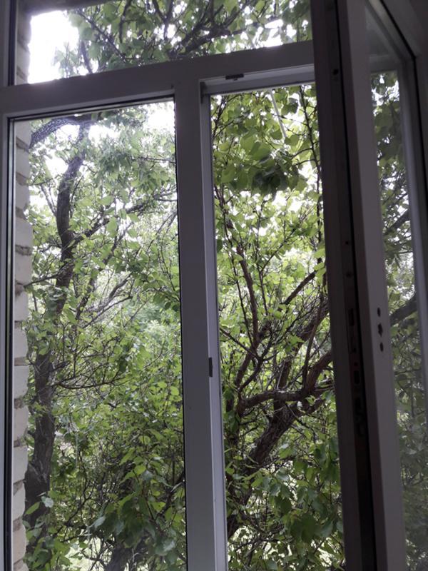 короткошёрстная Магнитогорск куда жаловаться что спилили дерево под окном отношения невозможны