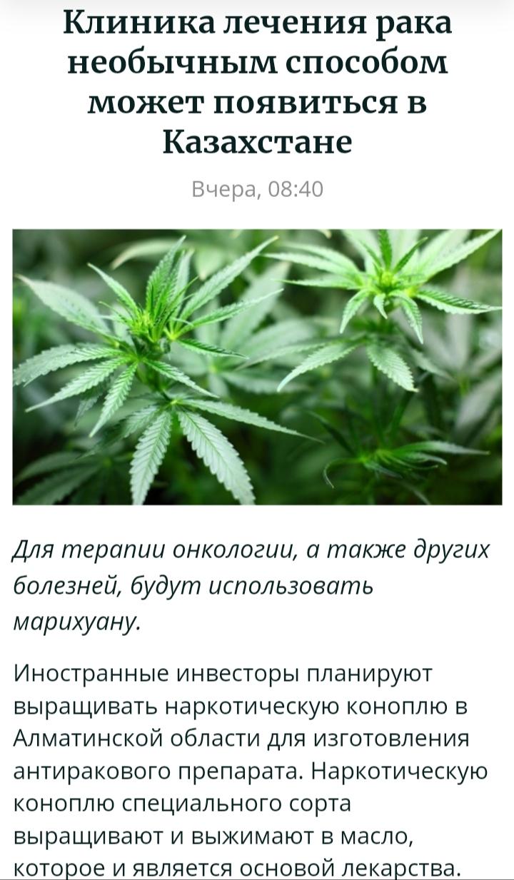 Можно ли курить марихуану при раке манага из конопли как варить