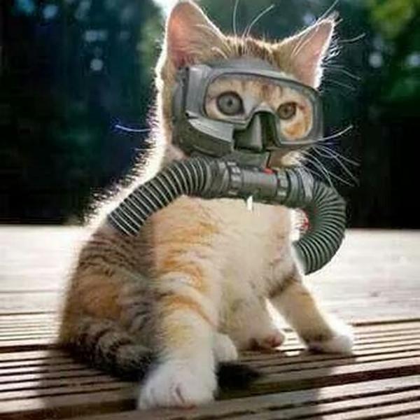 картинки кота водолаза