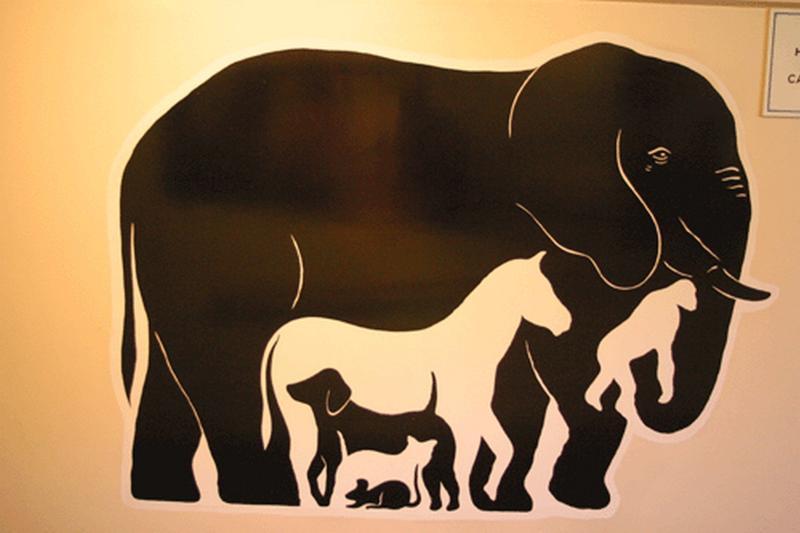 это сколько животных видишь на картинке ответ виртуальному