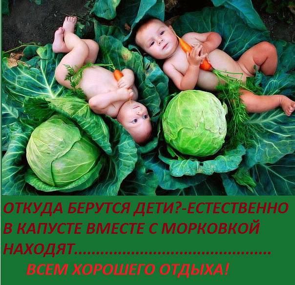 Дети цветы жизни картинки прикол, картинки