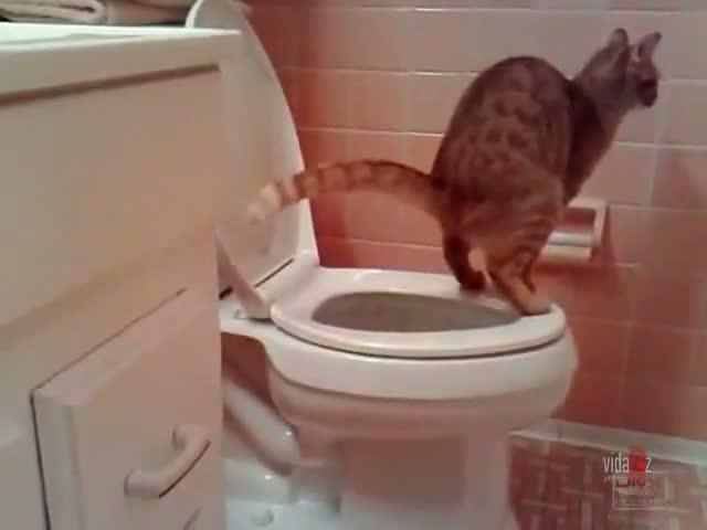 can you get tetanus from a cat scratch