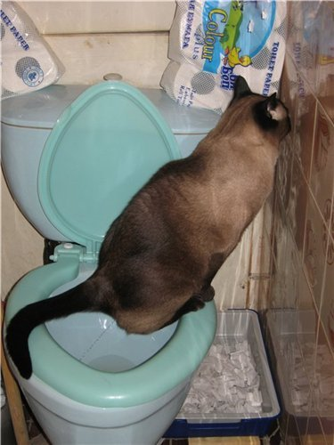 этом разделе к чему снится что мать ходит в туалет обращение