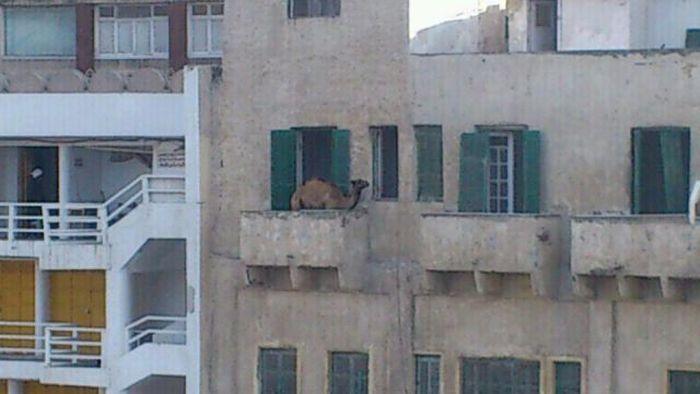 Ответы@mail.ru: кто у вас живет на балконе?.