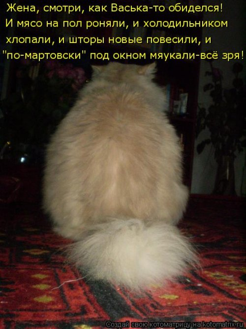 Ты обиделась картинка с кошкой и надписью, картинки про кошек