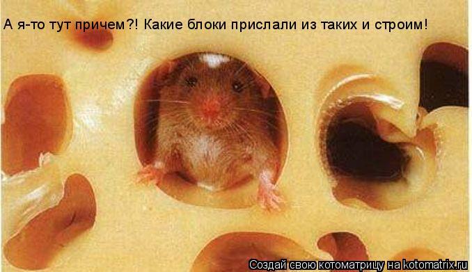 Хомяк ест сыр