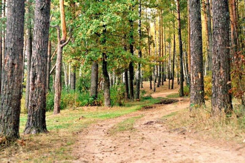 фото леса смотреть онлайн #10