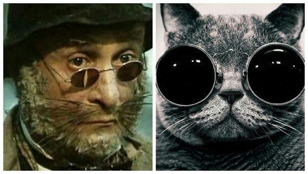 Кот базилио в очках картинка