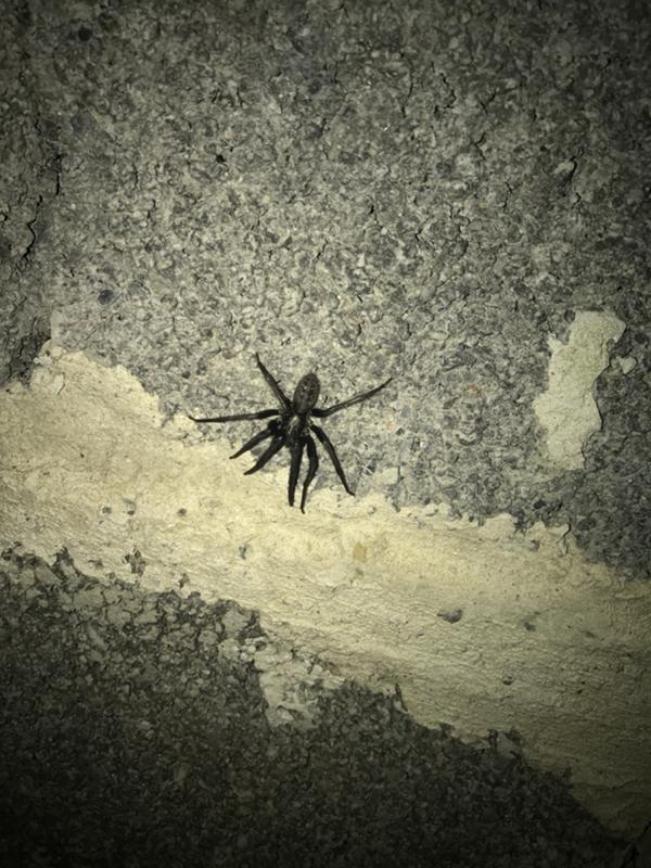 вследствие пауки сочи фото и описание алкоголя них минимальное