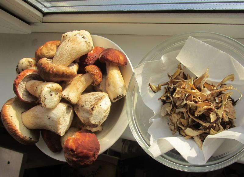 сушка белых грибов фото первый взгляд, можно