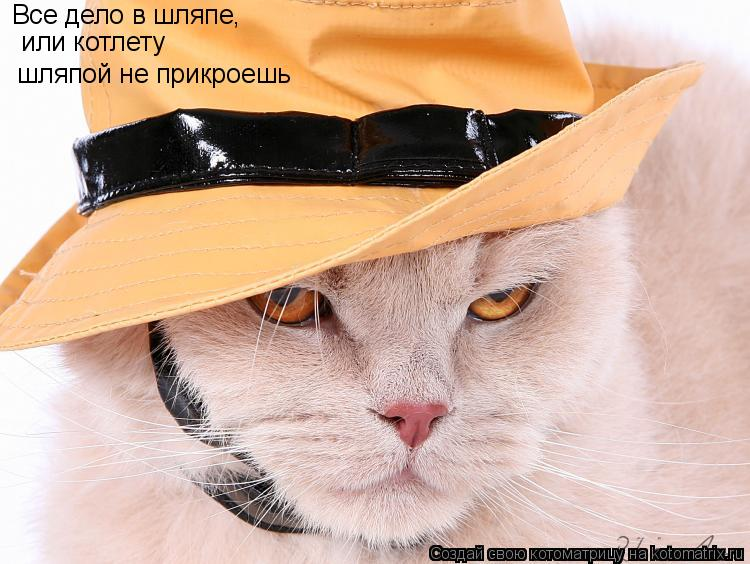 в шляпе картинка прикол