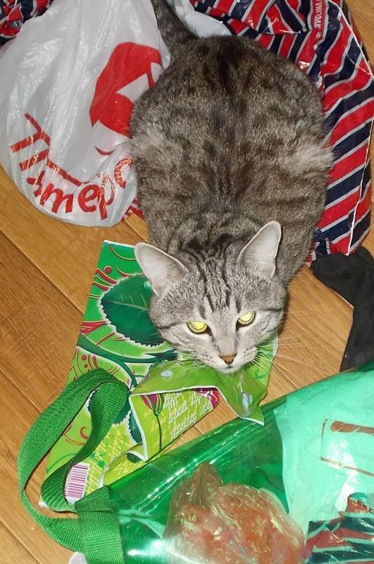 Картинка скотина года кот