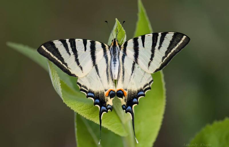 butterfly diversity research papers