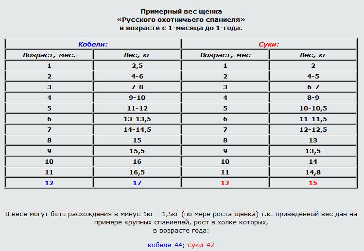 вес щенков русского спаниеля