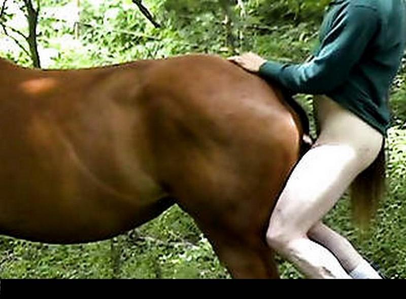 Порно Лошадям Нарезка