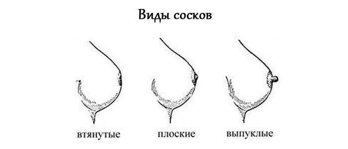 Как определить какие соски у девушки фото 116-51
