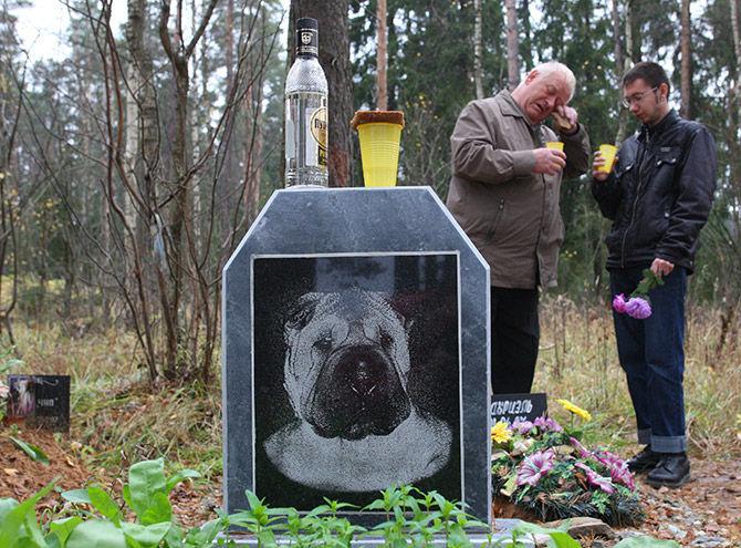 можно ли хоронить собак на человеческом кладбище регулировка углов установки