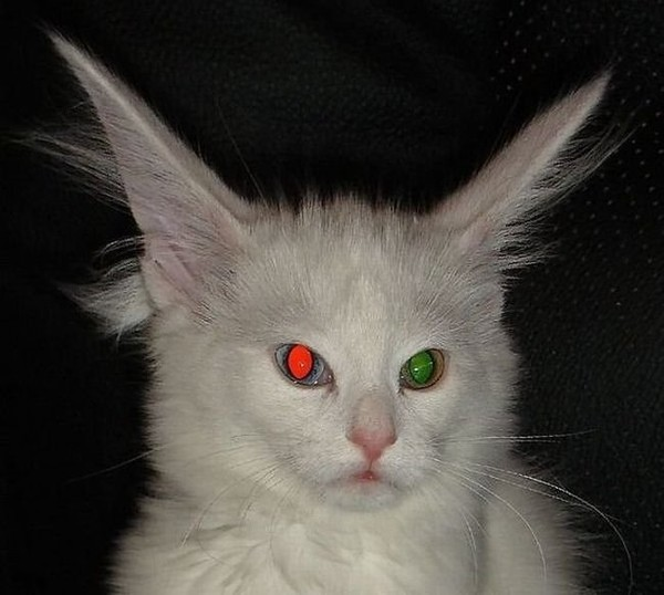 глаза как у кошки