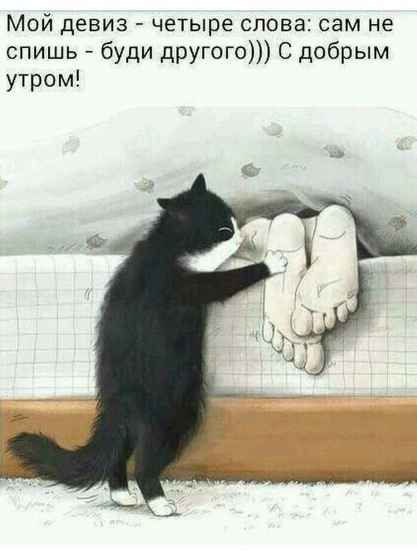 С добрым утром прикольные картинки с кошками с подписями, сделать открытку
