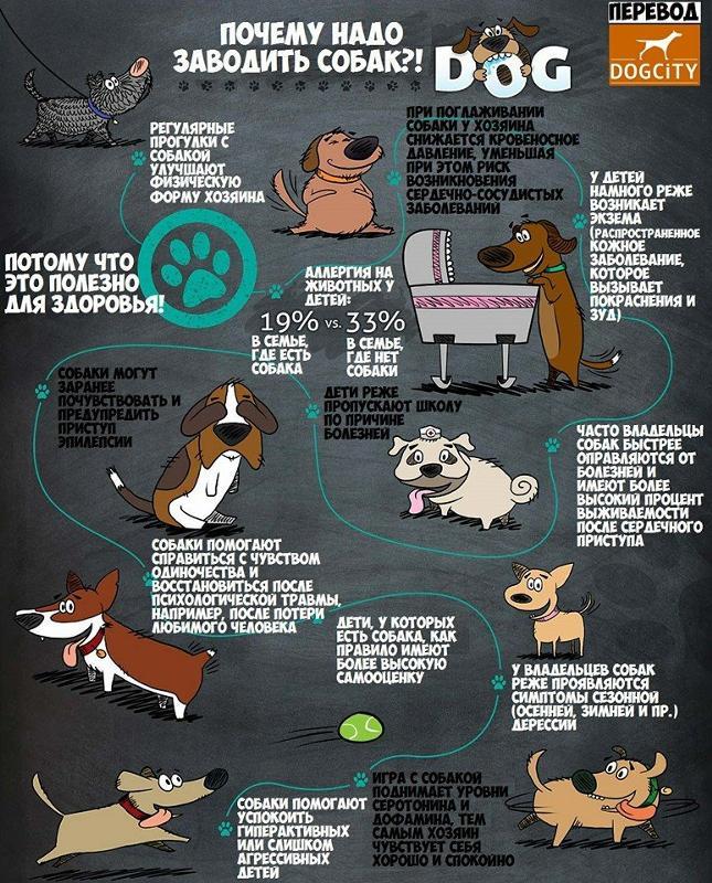 Можно ли заводить кота в год собаки