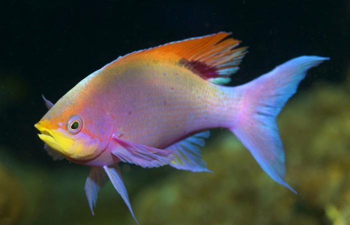 Чем рыба к снится