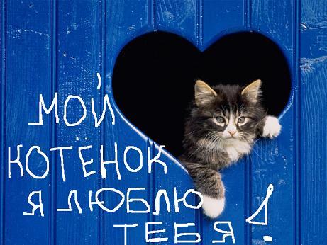 Машинки, открытка люблю тебя котенок мой