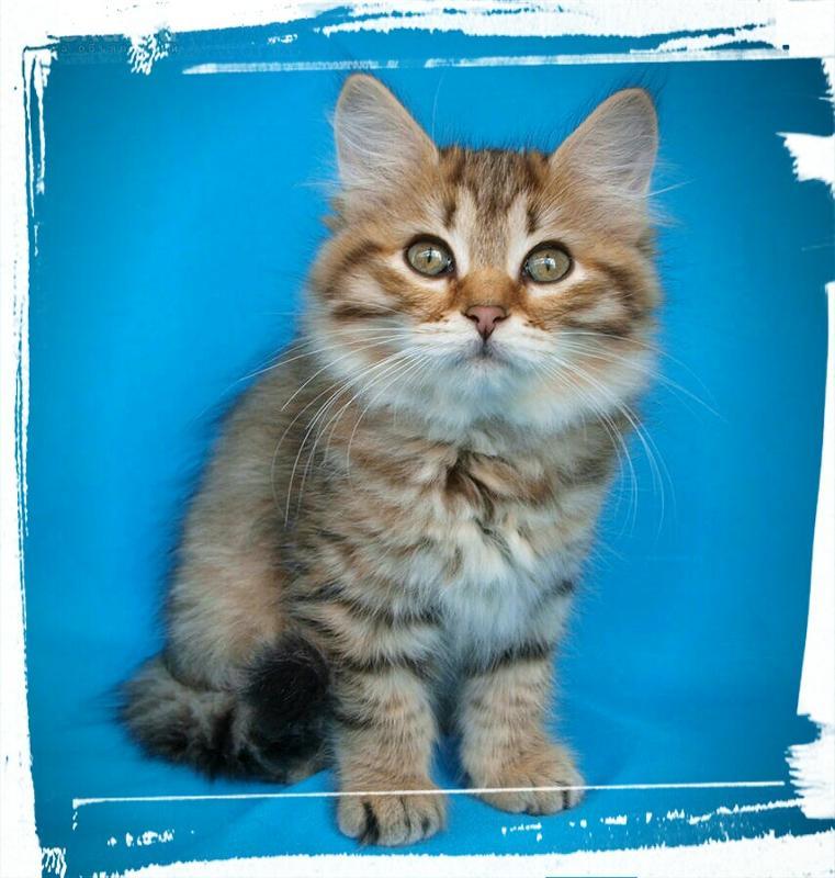какие кошки самые лучшие