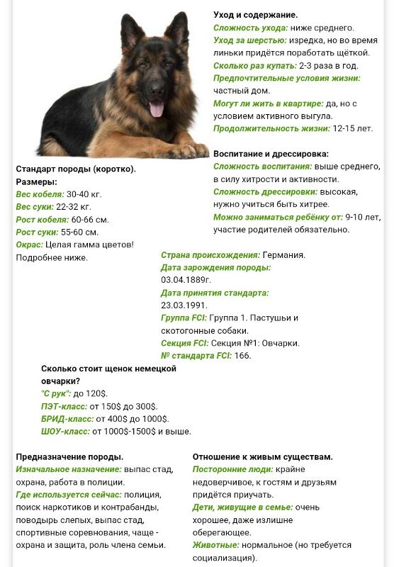 Брид класс собак описание