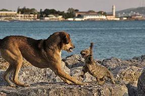 Задрали кота собаки