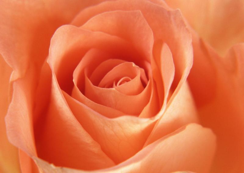 Фотообои персикового цвета