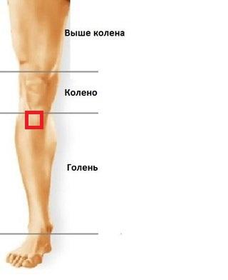 части ноги человека фото с описанием как