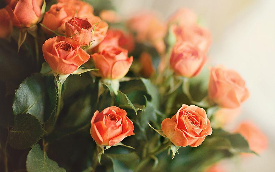 Кустовые розы картинки с днем рождения, для