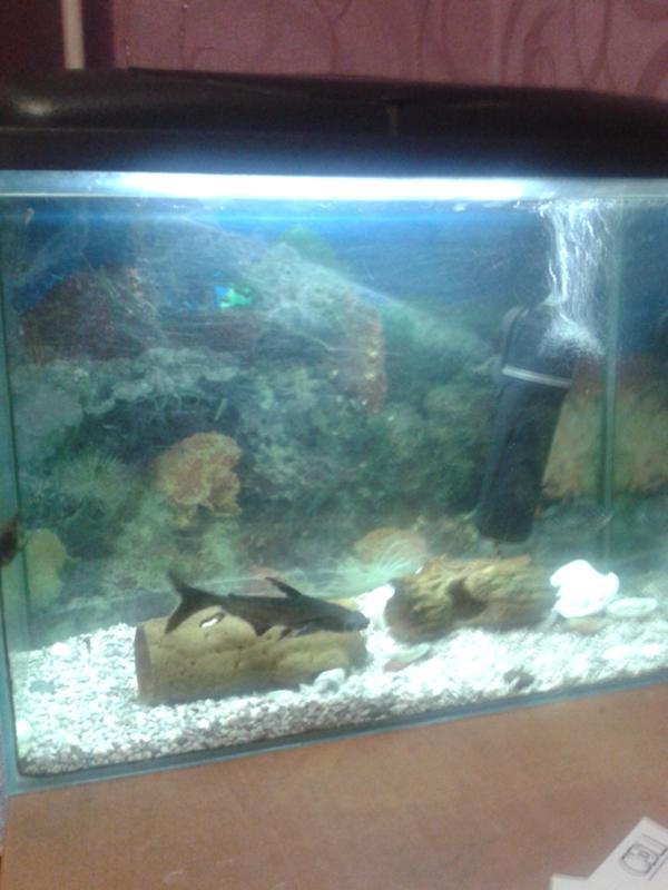 aquariumvlru  ПОРТАЛ АКВАРИУМИСТИКИ