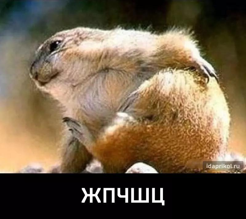 """Власти Германии подтвердили исключение из санкций Суркова для участия в """"нормандской"""" встрече - Цензор.НЕТ 6625"""