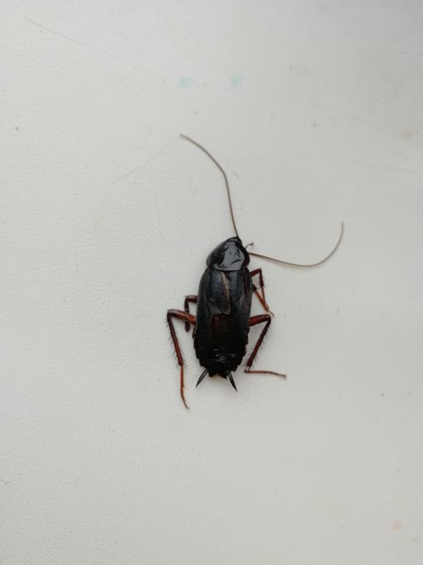 жуки похожие на тараканов фото каждому гостю