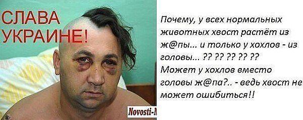 Ответы Mail.ru: Хвост не может ошибаться.